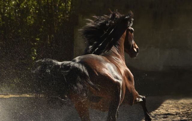 Tony Stromberg.Equine Phontography